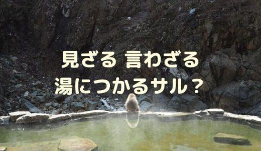 温泉に浸かる猿?地獄谷野猿公苑(スノーモンキーパーク)・志賀高原を巡る長野旅行をご紹介